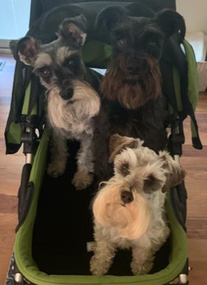 Professor Clovis with his Dog Family