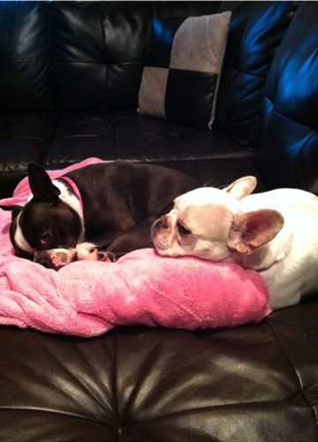 Jill and Popcorn on Their Pink Blanket