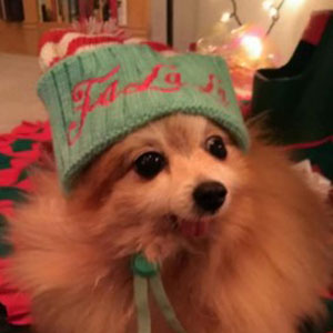 Super Scootie Sporting her Holiday Hat