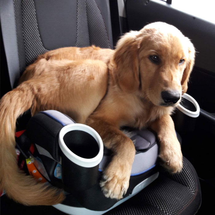 Teddy Graham in a Car Seat