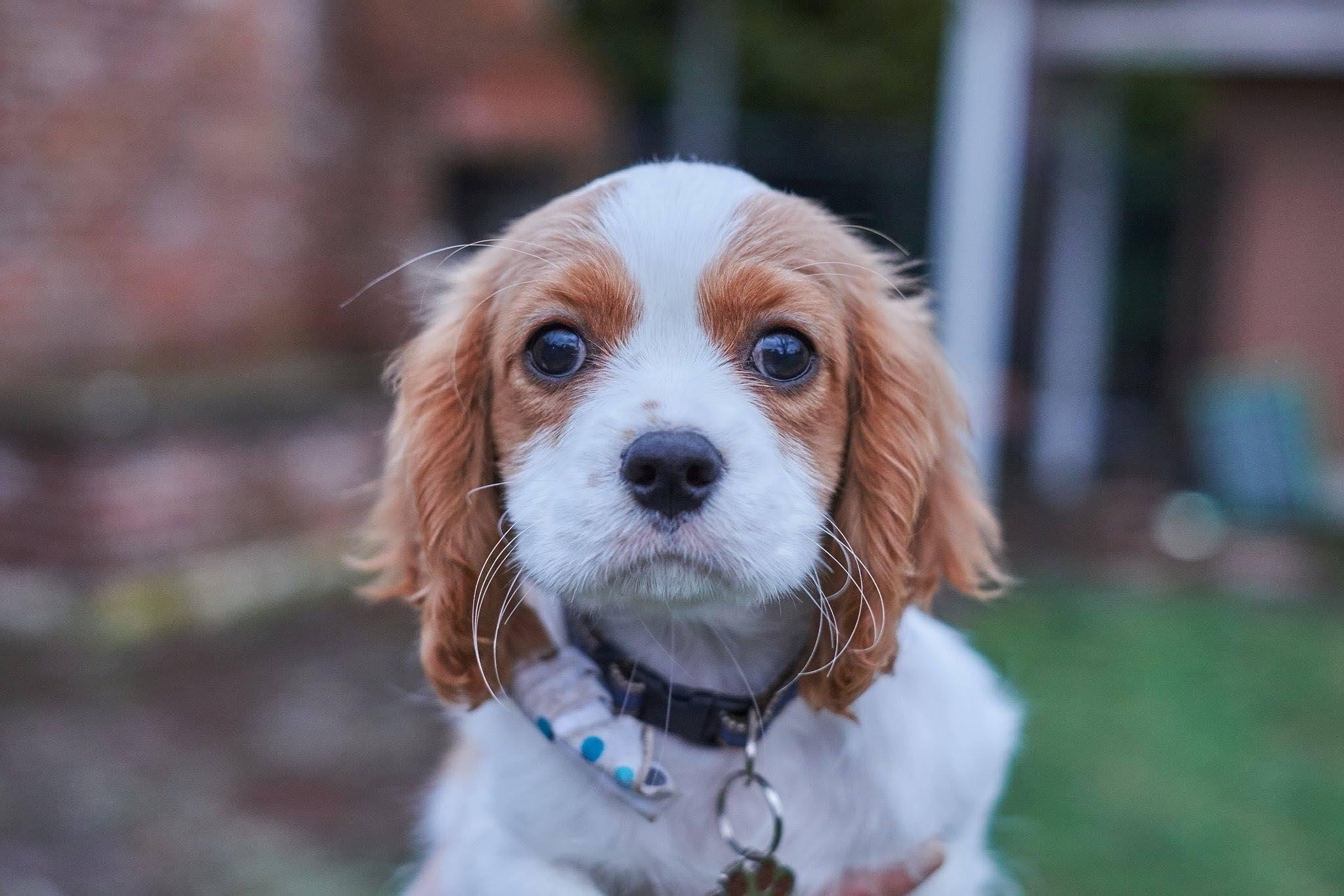 puppy lewis
