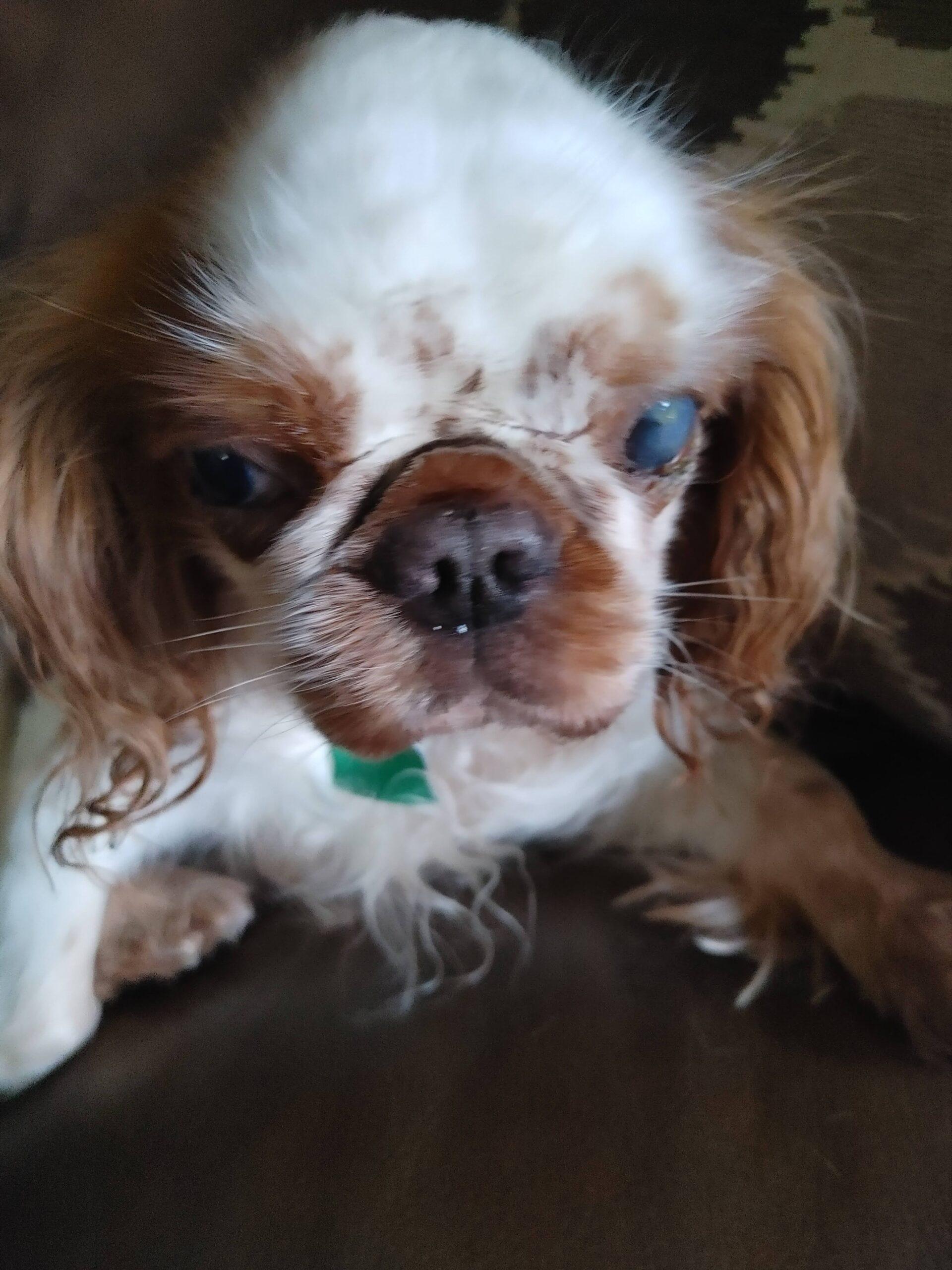 sweet little Winston