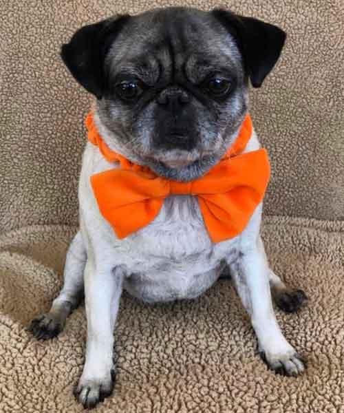 Crunchy Crouton in an Orange Bow Tie