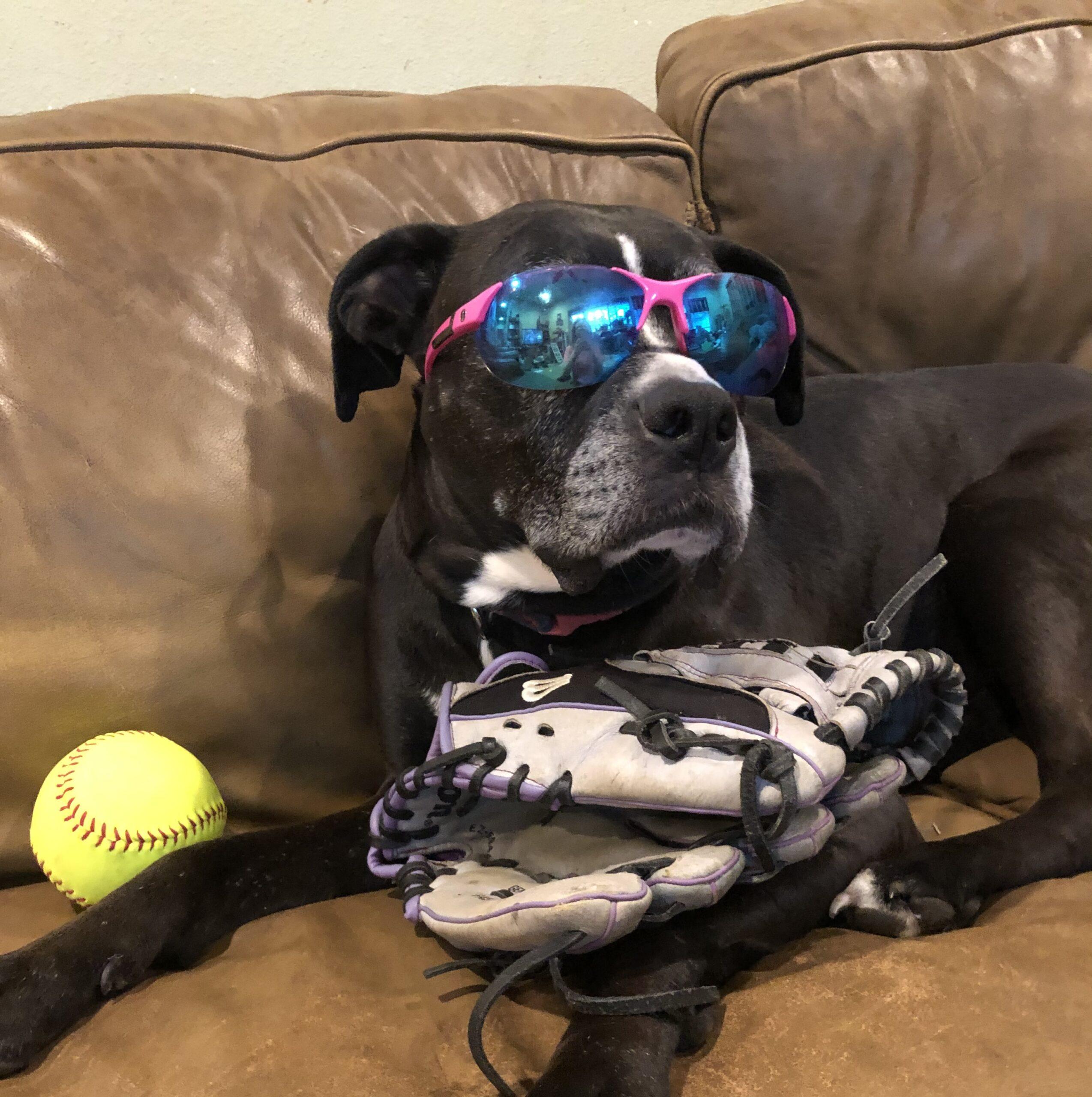 maggie sunglasses