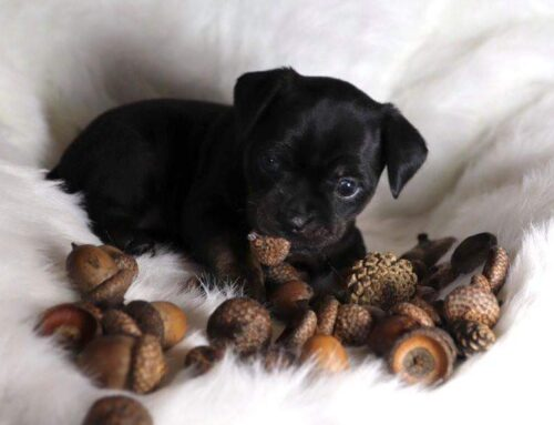 Acorn from the Nutty Litter